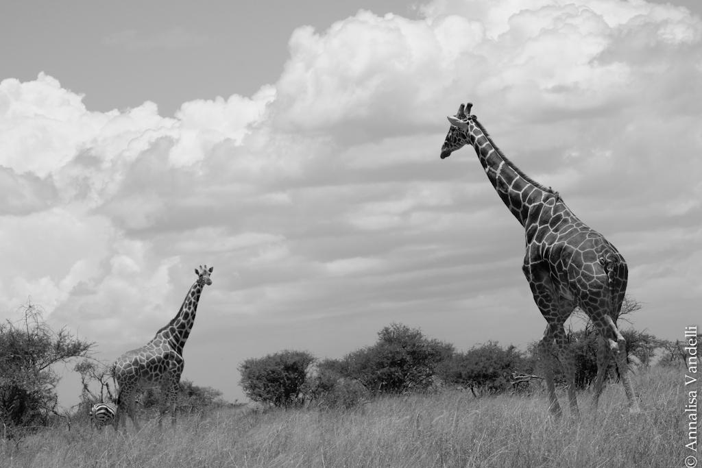 AVandelli Kenya-0114