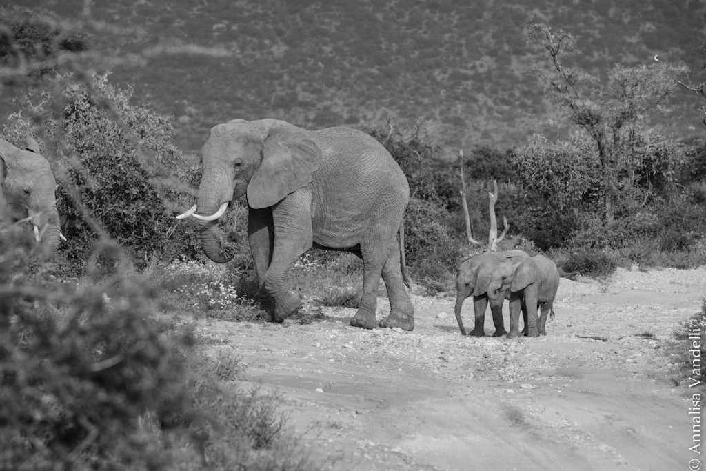AVandelli Kenya-0903