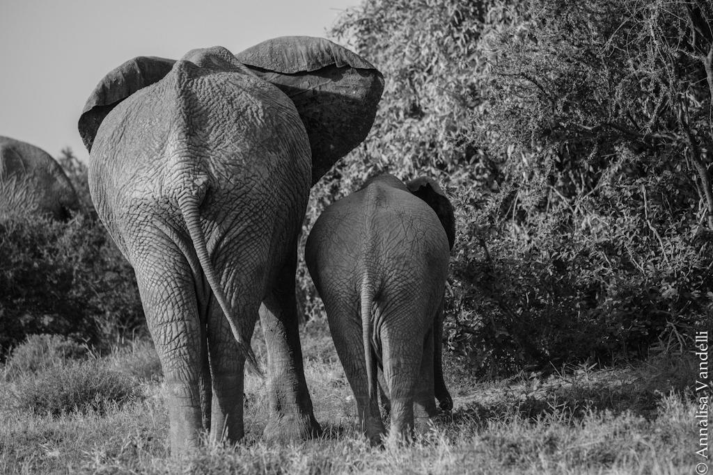 AVandelli Kenya-0918