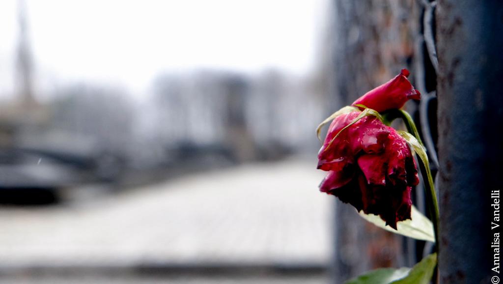 AnnalisaVandelli Auschwitz 013