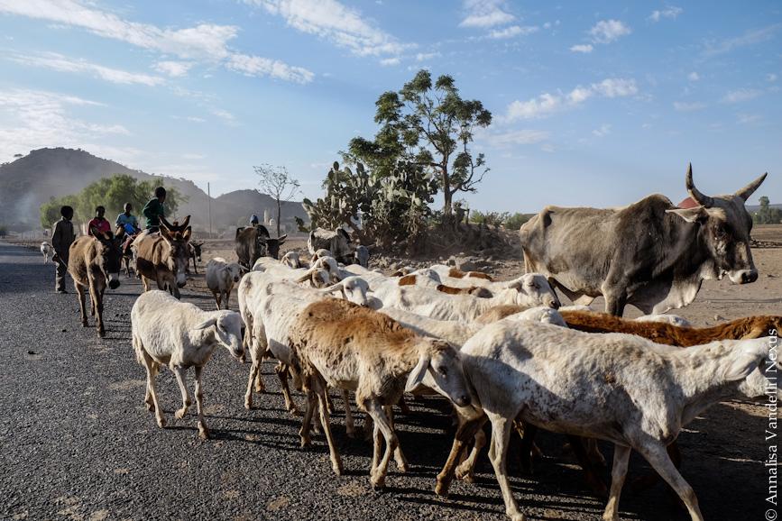 AnnalisaVandelli Eritrea-0908