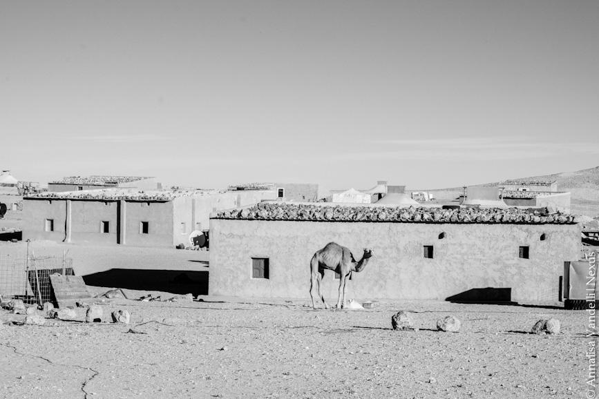 Sahrawi Sito-0300